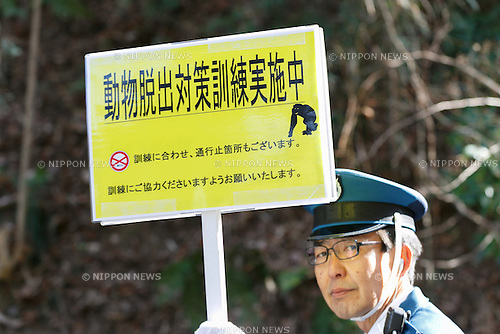 A zookeeper holds a warning sign to prevent visitors about an escaped chimpanzee during an Escaped Animal Drill at Tama Zoological Park on February 7, 2017, Tokyo, Japan. The annual escape drill is held in Tokyo zoos for zookeepers to practice how they would need to react in the event of a natural disaster or another emergency. This year a member of staff wearing a chimpanzee costume was captured and subdued by other zookeepers before it could escape out onto the streets of Tokyo. During the drill, participants used large nets, sticks and tranquilizer guns to make sure the monkey didn't get away. (Photo by Rodrigo Reyes Marin/AFLO)
