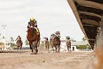 HALLANDALE BEACH, FL - DECEMBER 03:   <br /> #4 Shaft of Light with jockey Emisael Jaramillo win the 7 furlong Rapid Transit at Gulfstream Park on December 03, 2016 in Hallandale Beach, Florida. (Photo by Arron Haggart/Eclipse Sportswire/Getty Images)
