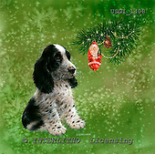 GIORDANO, CHRISTMAS ANIMALS, WEIHNACHTEN TIERE, NAVIDAD ANIMALES, paintings+++++,USGI1408,#XA#