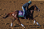 November 3, 2020: Channel Maker, trained by trainer William I. Mott, exercises in preparation for the Breeders' Cup Turf at Keeneland Racetrack in Lexington, Kentucky on November 3, 2020. John Voorhees/Eclipse Sportswire/Breeders Cup/CSM
