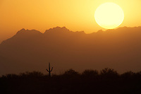 Sunset with one lone saguaro. Saguaro National Park. Arizona
