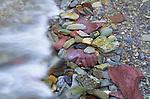 Riverbed, Marble Canyon, Kootenay National Park, British Columbia, Canada