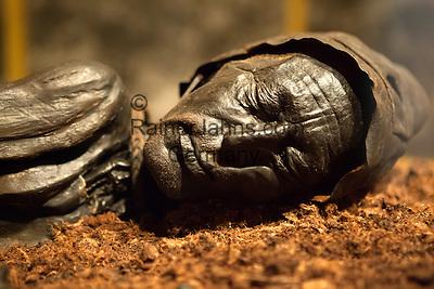 Denmark, Jutland, Silkeborg: Tollund Man, dating back to 350BC, in the Silkeborg Museum | Daenemark, Juetland, Silkeborg: Der Tollund-Mann (auch Tollundmann) im Silkeborg-Museum, eine Moorleiche, die 1950 in einem Hochmoor entdeckte wurde