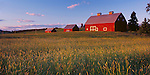 Latah County, ID<br /> Evening light on a red gambrel roofed barn and two accompanying out buildings, near Potlatch