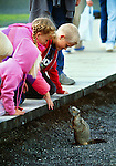 A marmot greets some young tourists, Yellowstone National Park, Wyoming