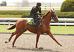 07 April 2011.  Hip #161 LIVE A LITTLE  Will He Shinte - In Kim's Honor colt, consigned by Jon Jazdzewski.
