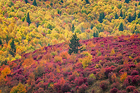 Autumn colors at Little Sam Knob