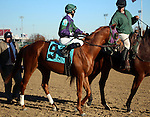 November 14, 2015 Arenzano (Marcellino Pedroza Jr.) also ran in the 7th race at Churchill Downs. His second dam is Horse of the Year Azeri. Owner Tom R. Walters, trainer James E. Baker. By Tapit x Arienza (Giant's Causeway ©Mary M. Meek/ESW/CSM