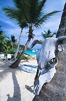 White Bay<br /> Jost Van Dyke<br /> British Virgin Islands