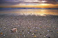 Clam shell and Stone Beach, Atlantic Ocean and surf at sunrise, Long Beach, New Jersey