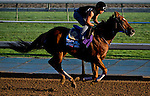 October 29, 2014:  Sweet Swap, trained by John Sadler, exercises in preparation for the Breeders' Cup Turf Sprint at Santa Anita Race Course in Arcadia, California on October 29, 2014. Scott Serio/ESW/CSM