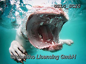 REALISTIC ANIMALS, REALISTISCHE TIERE, ANIMALES REALISTICOS, dogs, paintings+++++SethC_CORALINE_MG_8596highworkBOOK,USLGSC25,#A#, EVERYDAY ,underwater dogs,photos,fotos ,Seth