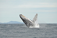 Humpbacks and Sea Lions of Los Cabos