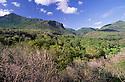 Native / endemic forest. Black River Gorges National Park, Mauritius.