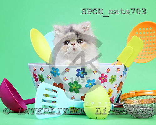 Xavier, ANIMALS, cats, photos, SPCHCATS703,#A# Katzen, gatos