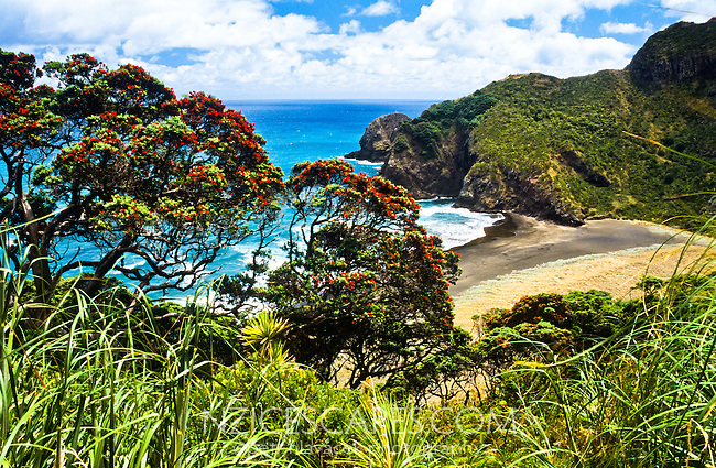 Whites Beach north of Piha township, West Auckland, New Zealand