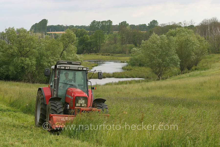 Landwirt, Bauer mäht Grünland mit Trecker, Mahd, Hellmoor, Bio-Bauer, Heu machen