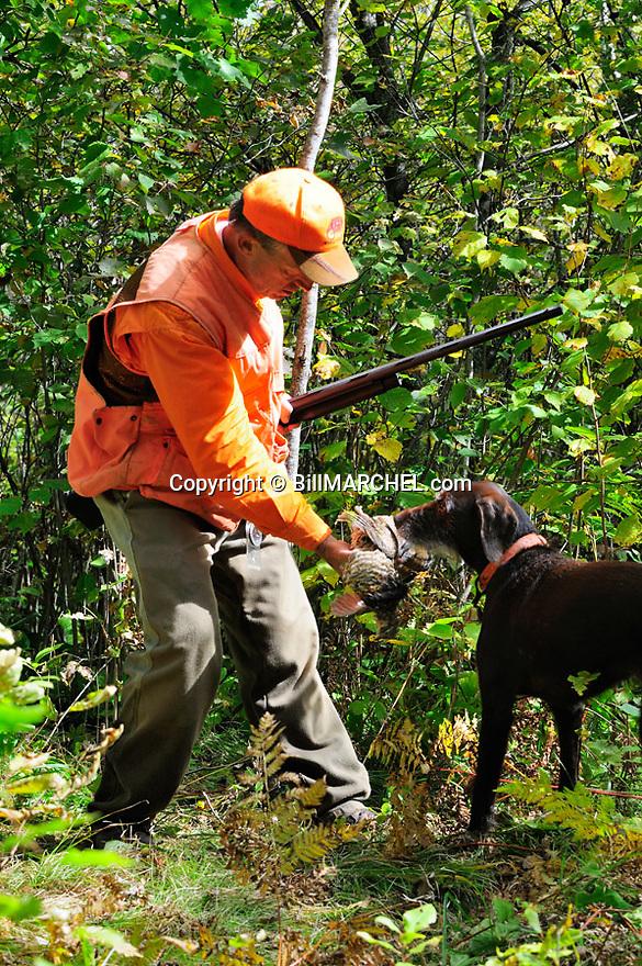 00515-074.08 Ruffed Grouse hunter takes bird from dog pudelpointer on edge of heavy early season cover.  Hunt, aspen, retrieve.