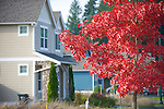 Side of House with Red Tree