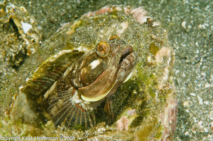 In and underwater photography by Karie Henderson © 2008