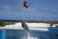 Dolphin trainer getting flipped into the air by a dolphin at Hawaii Sea Life Park on the east side of Oahu