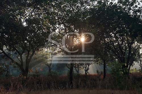 Xingu Indigenous Park, Mato Grosso, Brazil. Aldeia Matipu; Sunlight coming through the transition  forest at dawn.
