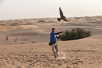 "United Arab Emirates (UAE). Dubai Desert Conservation Reserve. Dylan Freeman is a falconer from Zimbabwe working for the Shaheen company. On a remote desert area, he is training a Gyr falcon to catch a fake prey tied on a rope. The gyrfalcon  (Falco rusticolus) is the largest of the falcon species. Falcons are birds of prey in the genus Falco, which includes about 40 species. The bird is carrying on his back a GPS antenna to track the animal in case it get lost flying away. Adult falcons have thin, tapered wings, which enable them to fly at high speed and change direction rapidly. Additionally, they have keen eyesight for detecting food at a distance or during flight, strong feet equipped with talons for grasping or killing prey, and powerful, curved beaks for tearing flesh. Falcons kill with their beaks, using a ""tooth"" on the side of their beaks. The United Arab Emirates (UAE) is a country in Western Asia at the northeast end of the Arabian Peninsula. 17.02.2020  © 2020 Didier Ruef"