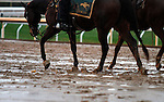 October 28, 2015:  Rainy Keeneland morning just days before the Breeder's Cup.  Candice Chavez/ESW/CSM