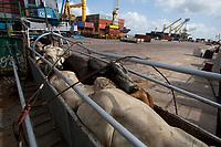 O navio ABOU KARIM de bandeira libanesa,  e tripulação síria, carrega 2500 cabeças de gado da exportadora AgroExport com destino a Venezuela, <br /> De acordo com dados da CDP-Cia Docas do Pará, de janeiro a setembro deste ano já foram embarcadas no porto de Vila do Conde cerca de 520.000 mil cabeças de gado para diversos países no oriente médio e américa do sul ,  por grandes exportadoras/produtoras de gado como a Mercúrio, Minerva e Kaiapós entre outras.<br /> Foto Paulo Santos<br /> Porto de Vila do  Conde, Barcarena, Pará, Brasil.<br /> 09/10/2013