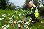 Johnny McGuire tending to the snowdrops on Mission Road Killarney on Monday