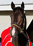 October 29, 2015: Valid, trained by Marcus Vitali and owned by Crossed Sabres Farm, is entered to run in the Breeder's Cup Las Vegas Dirt Mile $1,000,000.    Candice Chavez/ESW/CSM