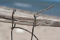 Naturkunst am Strand, Kind bastelt aus Steinen, Muscheln, Schnecken und anderem Strandgut ein Strandmobile, Fundstückemobile, Mobile, eine fadenförmige Alge wird als Schnur verwendet, Strandkunst, Strand, Meer, Küste