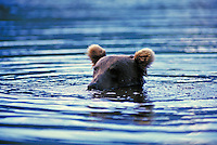 Brown bear peeking out of water, Wolverine Creek, Alaska. Alaska United States Wolverine Creek.