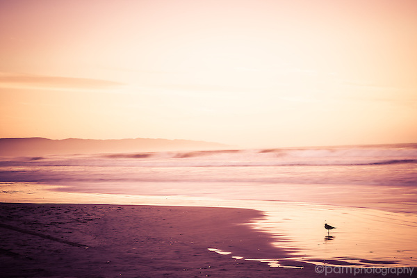 Lone seagull standing on the beach at sunrise