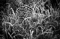 Frost clings to grass and trees in ranch fields south of Ulm, Montana, USA.