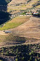 vineyards quinta do porto ferreira sign the house of dona antonia ferreira douro portugal