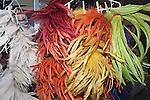 Rainbow Feather, Downtown Las Vegas, Nevada