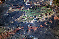 A Napa Valley vineyard surrounded by burned areas and fire retardant survives the 2020 Glass wildfire, Napa Valley, California