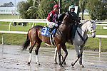 NEW ORLEANS, LA - JANUARY 21:<br />  Rocket Time #3 ridden by Colby Hernandex in the post parade before the Louisiana Stakes at the Fairgrounds Race Course on January 21,2017  in New Orleans, Louisiana. (Photo by Steve Dalmado/Eclipse Sportswire/Getty Images)