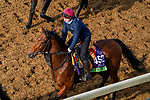 November 5, 2020: Circus Maximus, trained by trainer Aidan P. O'Brien, exercises in preparation for the Breeders' Cup Mile at Keeneland Racetrack in Lexington, Kentucky on November 5, 2020. John Voorhees/Eclipse Sportswire/Breeders Cup/CSM