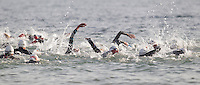 27 JUL 2013 - CROMER, GBR - Competitors start their swim from West Runton to Cromer, North Norfolk, Great Britain at the beginning of The Anglian Triathlon 2013 (PHOTO COPYRIGHT © 2013 NIGEL FARROW, ALL RIGHTS RESERVED)