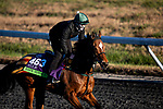 November 2, 2020: Safe Voyage, trained by trainer John Quinn, exercises in preparation for the Breeders' Cup Mile at  Keeneland Racetrack in Lexington, Kentucky on November 2, 2020. Alex Evers/Eclipse Sportswire/Breeders Cup