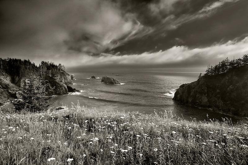 Wildflowers and cove. Samuel H. Boardman State Scenic Corridor. Oregon