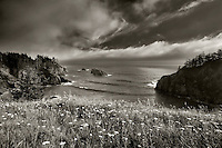 Wildflowers and cove. Samuel H. Boardman State Scenic Corridor. Oregon