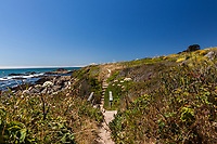 A slice of the path along the bluff at Bean Hollow State Beach passes down, then across a short bridge before climbing up again and continuing on to the Harbor Seal viewing site.
