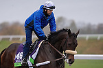 October 28, 2015:  Recepta, trained by James J. Toner and owned by Phillips Racing Partnership & Pam Gartin, exercises in preparation for the Breeders' Cup Filly & Mare Turf at Keeneland Race Track in Lexington, Kentucky on October 28, 2015. Jon Durr/ESW/CSM