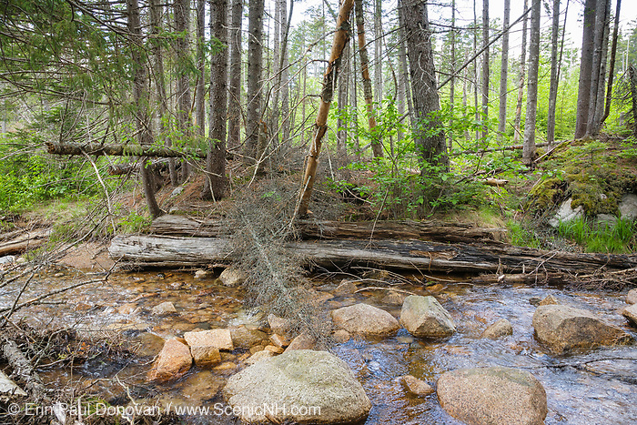 Remnants of a wooden bridge along a spur line of the old East Branch & Lincoln Railroad (1893-1948) in the Pemigewasset Wilderness in Lincoln, New Hampshire. This spur line came off of the Carrigain Branch of the EB&L Railroad, and it was used to access the Notch Brook drainage of the Pemigewasset Wilderness. This small bridge crossed Notch Brook.