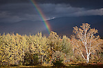 A rainbow punctuates fall foliage, Sugar Hill, White Mountains, NH