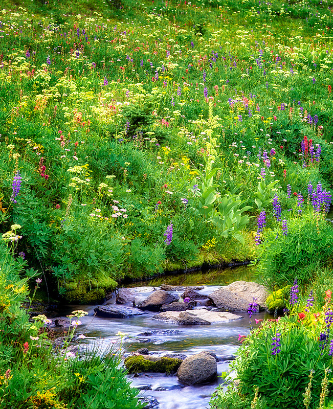 Wildflowers and stream. Bird Creek Meadows, Washington.