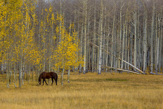 Fall colors have arrived in the highlands of Southern Utah.
